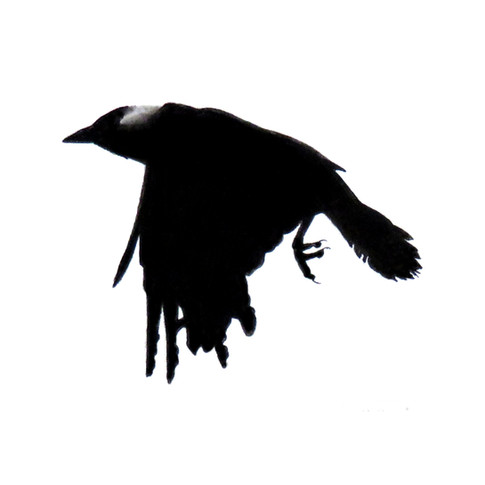 Murder Crow 2