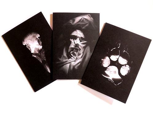 Tales in Sombre Tones blank horror cards 3 pack - crow skull, werewolf print,
