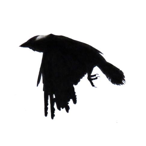 Murder Crow 24