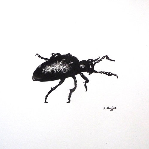 Black beetle drawing on white background in an oak frame