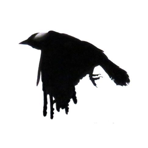 Murder Crow 16