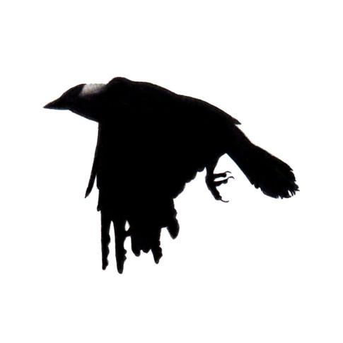 Murder Crow 3