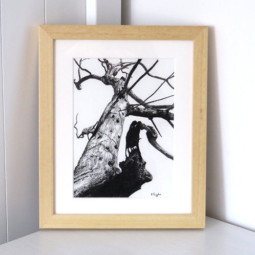 small framed tree study in charcoal pencil on textured watercolour paper