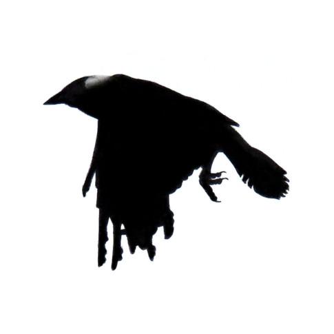 Murder Crow 26