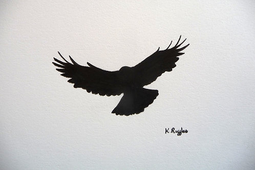 crow in flight from below black against white wings out to the sides flight feathers spread