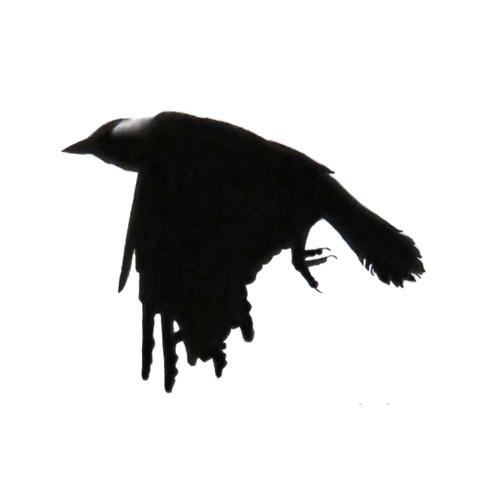 Murder Crow 9