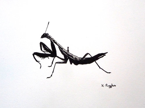 simple praying mantis illustration on black and white