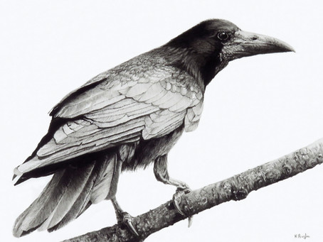 Courting Crows - rooking about.