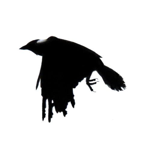 Murder Crow 28
