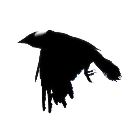 Murder Crow 20