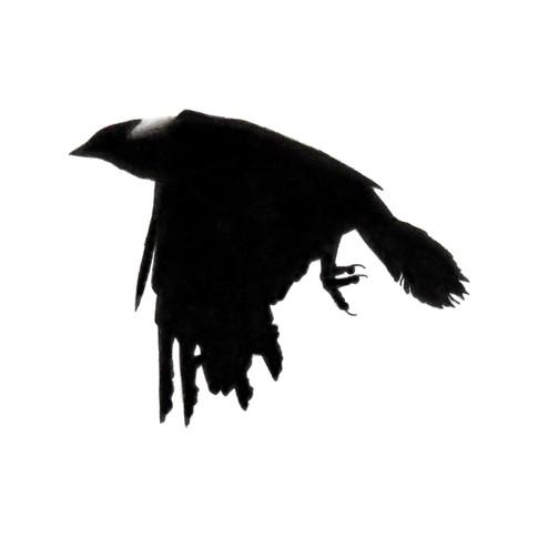 Murder Crow 21