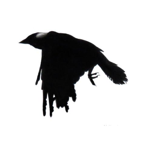 Murder Crow 25