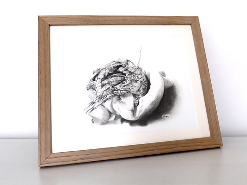 Hermit crab in a white shell on white background worked in pencil on paper