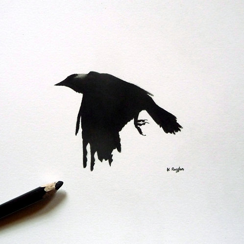Crow flying with wings down small drawing with pencil black and white