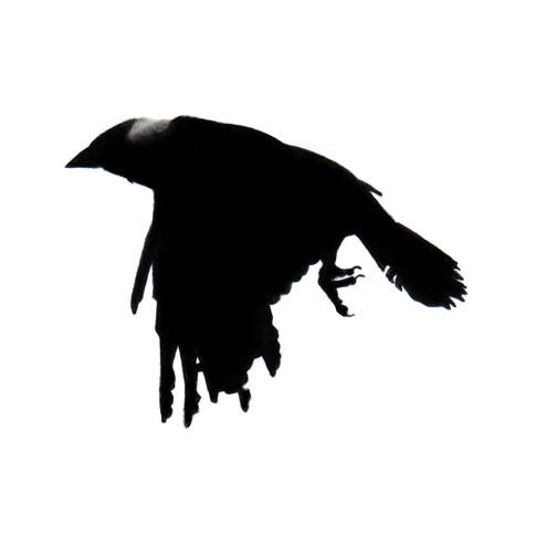 Murder Crow 27