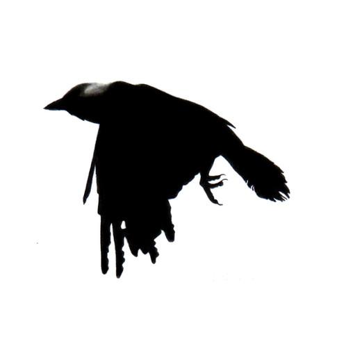Murder Crow 1