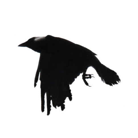 Murder Crow 6