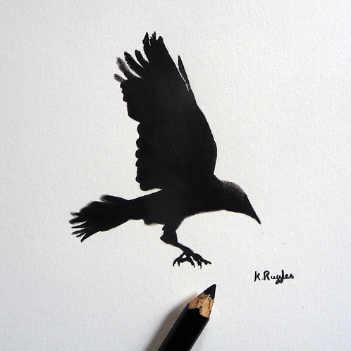rook flying drawing with wings up and feet outstretched landing
