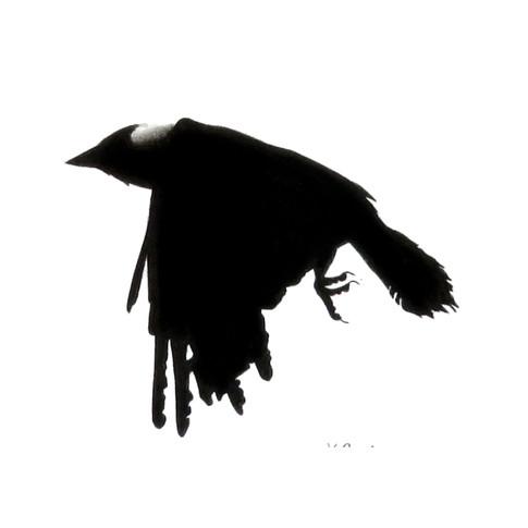 Murder Crow 29