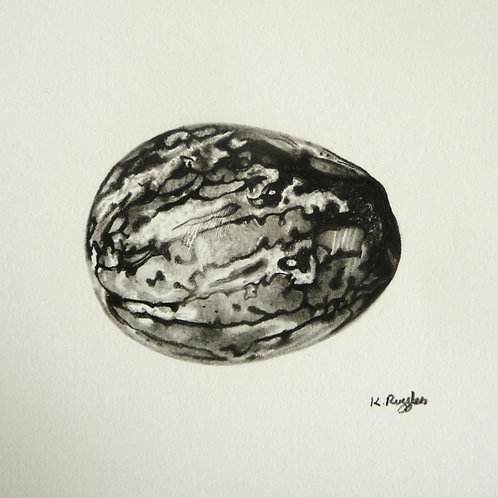 still life drawing of a nutmeg worked in charcoal pencil on fabriano artistico paper, food art