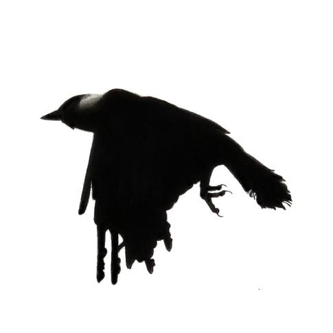 Murder Crow 12