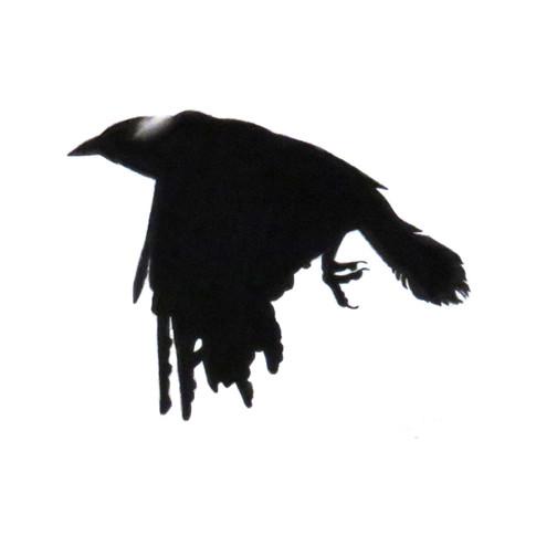 Murder Crow 15