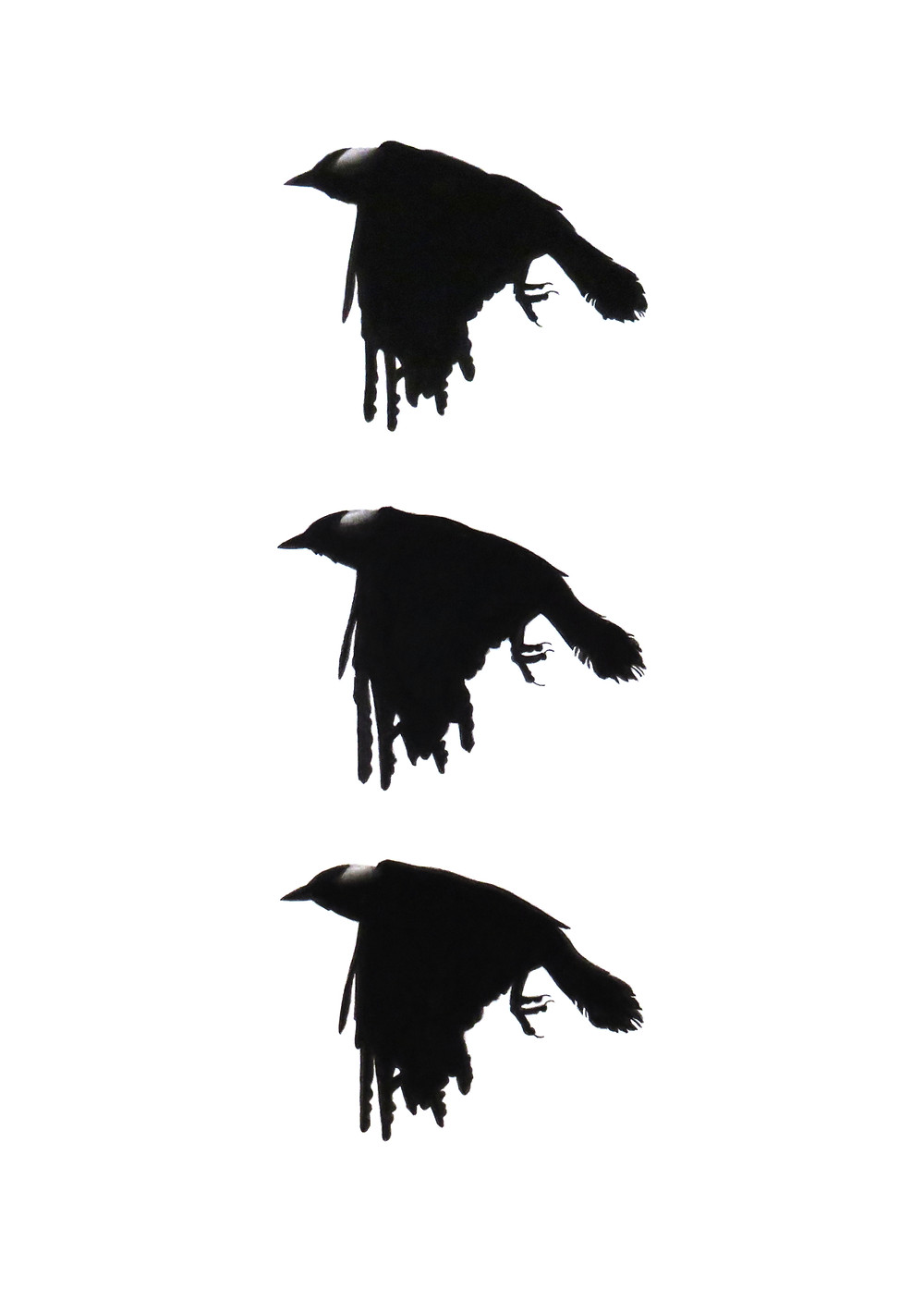 limited edition crow print