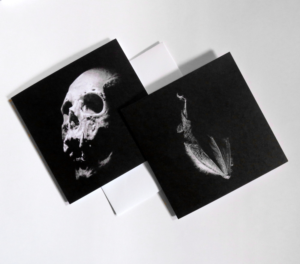 Human skull and sleeping bat drawings printed on two square greeting cards