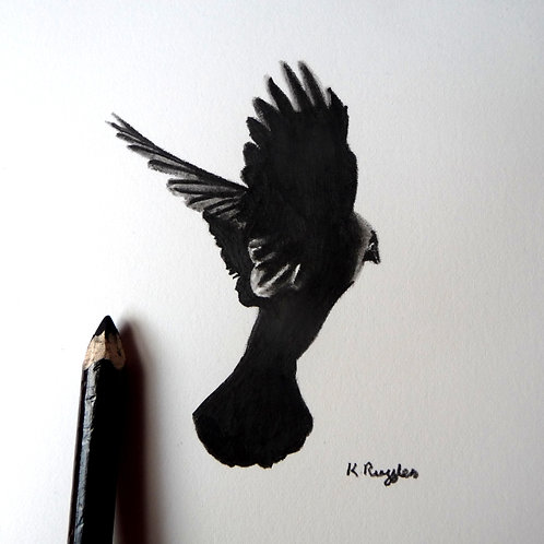 jackdaw flying away original charcoal pencil drawing black and white
