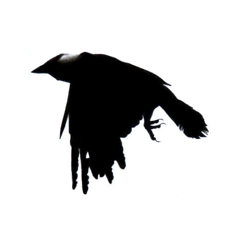 Murder Crow 19