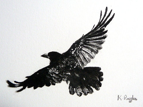 detailed miniature charcoal pencil drawing of a rook in flight showing sun reflected on feathers