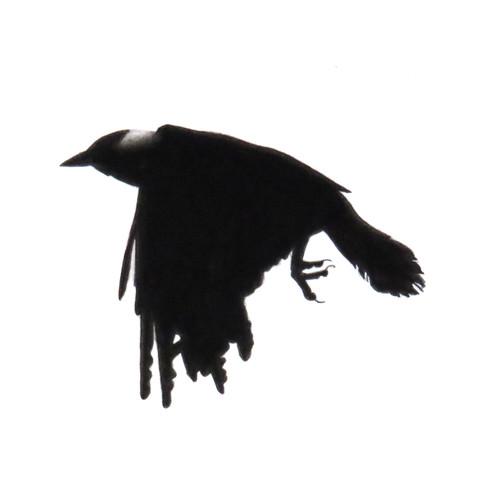 Murder Crow 18