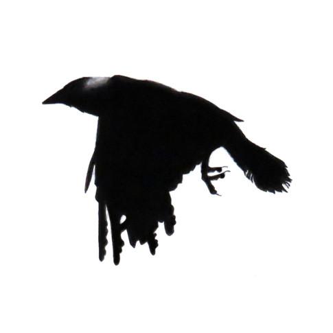 Murder Crow 13