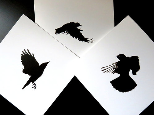 three blank greeting cards featuring drawings of crows in flight, two jackdaws and a rook