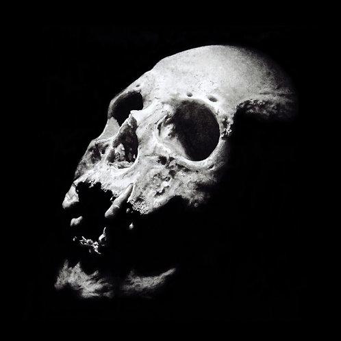 Human skull fine art print with mount