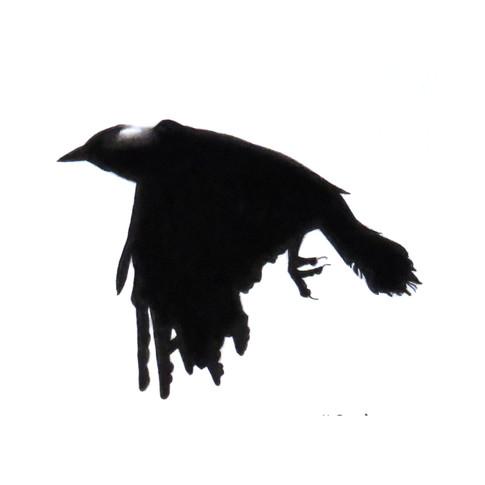 Murder Crow 17