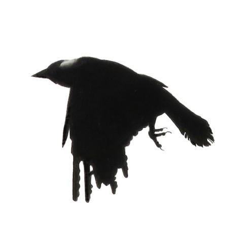 Murder Crow 10
