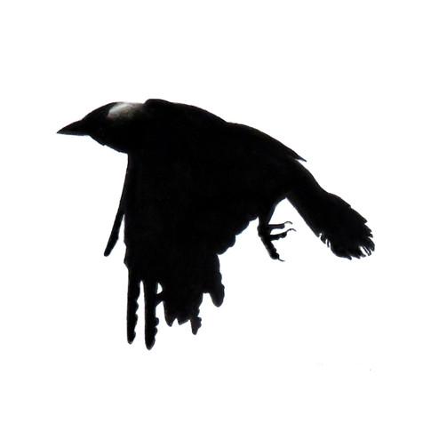 Murder Crow 5