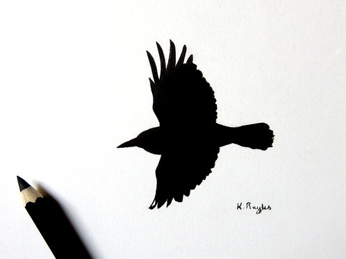 Small charcoal pencil drawing of a rook in flight with both wings outstretched
