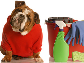Cleaning Products & Your Pets