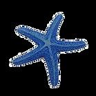 stella SX425_.png