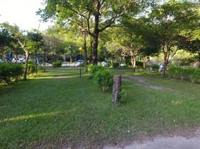 Campsite grass.jpg
