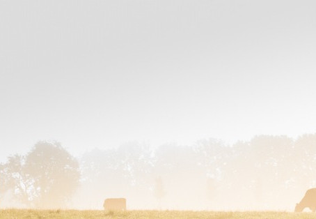 Jeudi rétrospectif | La variole bovine (cowpox)