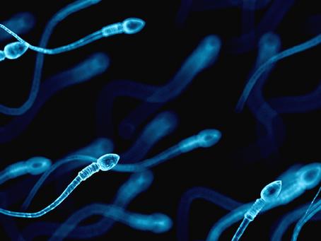 Article 10 | Les polluants environnementaux nuisent-ils à la fertilité masculine ?