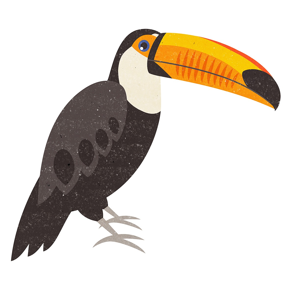 TUCAN ILLUSTRATION