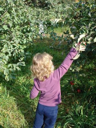 Apple picking at Small Ones Farm