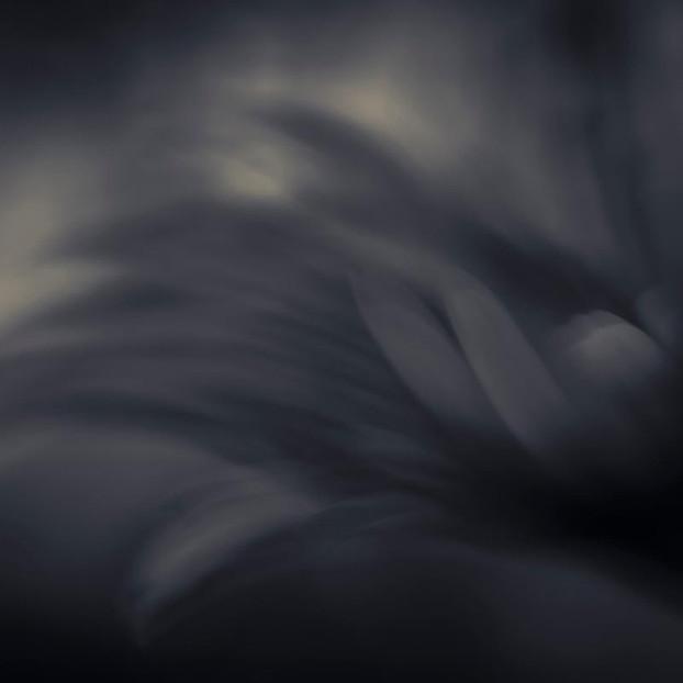 Πικροδάφνη Χιροσίμα