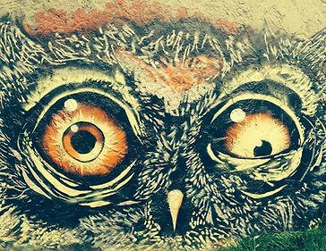 buho-animal-graffiti-ave-drawing-crazy.j