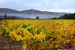 wine catrala