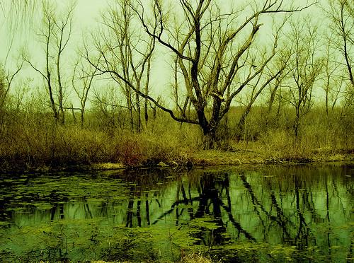 swamp green.jpg